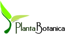 Planta-botanica Gutscheine